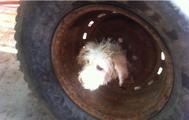 Firefighters Rescue Dog Trapped in Old Wheel Rim