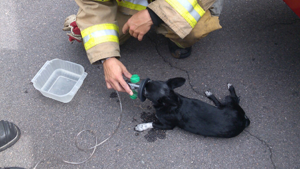 Firefighters save Small Dog from Fire