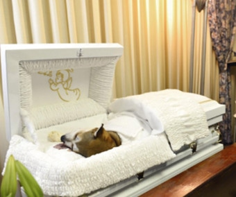 Loved Dog Gets Human-Like Funeral