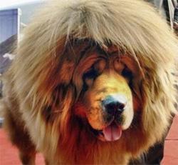 China's New Lions Bark!