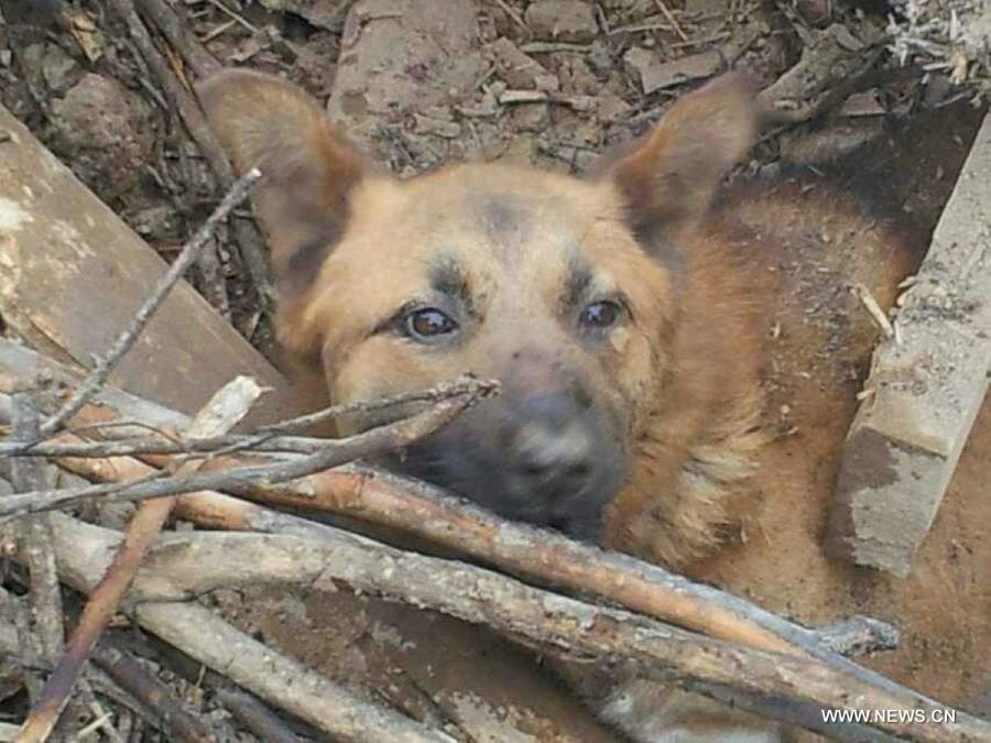 Dog Survives 77 Hours Trapped in Earthquake Debris
