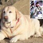 Police Arrest Man Who Left Dog to Die Inside Mini Van