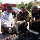 Pet Oxygen Mask Saves Dog Trapped in Fire