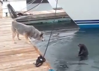 Sea Otter Teases Dog