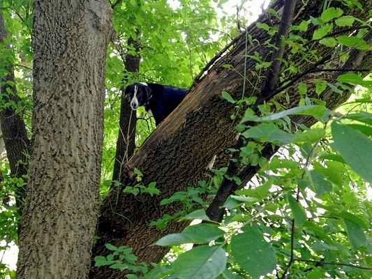 Missing Dog Found in Tree and Rescued