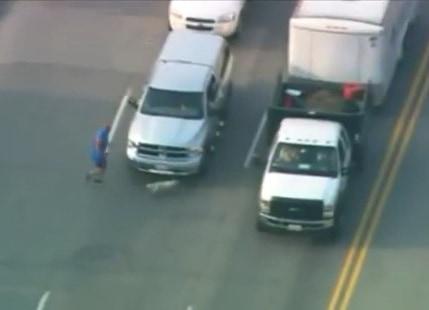 Good Samaritans Rush to Help Dog Running Down Busy Freeway