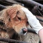 Chinese Police Officer Breaks Laws to Rescue Dogs