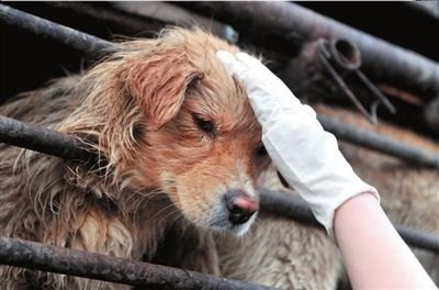 8.2.13 - Chinese Cop Rescues Dogs1