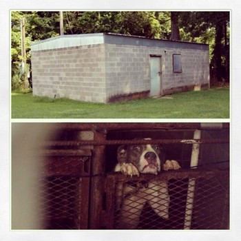 Online Petition Leads to Demolition of Inhumane Shelter