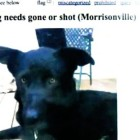 Woman Saves Dog Threatened to Be Shot by Owner on Craigslist