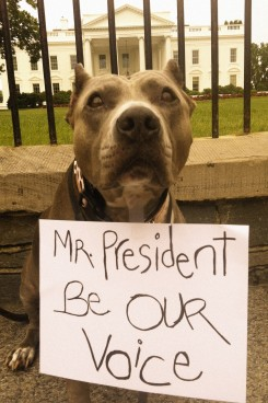 President Obama Stands Up for Pit Bulls & Blasts BSL