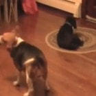 Dog Wants Bone, But How to Get it?