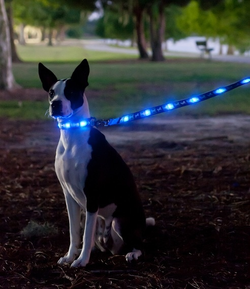 Dog-E-Glow Collars and Leashes