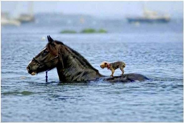 Άλογο σώζει σκύλο...