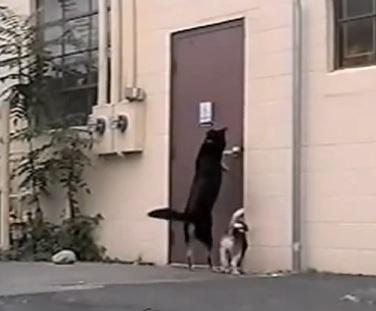 Three-Legged Dog Helps Four-Legged Buddy