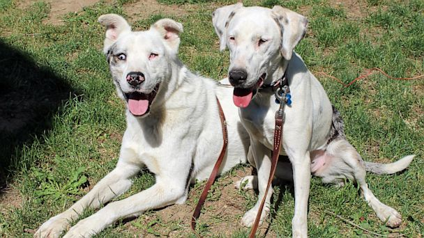 Blind and Deaf Dog Friends Adopted Together