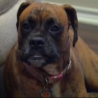 City Employee Fired after Weed-Whacking Dog