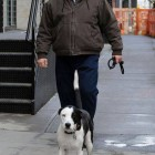 James Gandolfini's Final Film Advocates Pit Bull Rescue