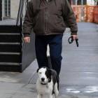 James Gandolfini's Final Film Advocates Pit Bull Rescue