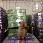 Dog Food Manufacturer Donates 57,920 Pounds of Kibble to Pet Rescues In Need