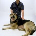 Owner Grateful After Veterinarians Save Dog's Life