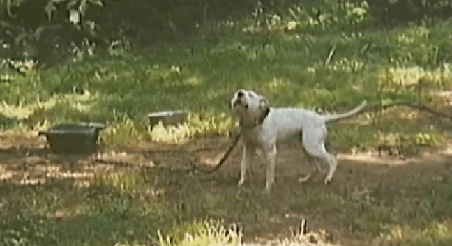 Man Arrested for Trying to Help Dog Chained to a Tree in the Heat