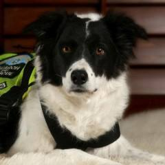 Search and Rescue Dog Retires after Nine Years of Service
