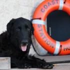 U.S. Coast Guard Rescues Dog from Honolulu Harbor