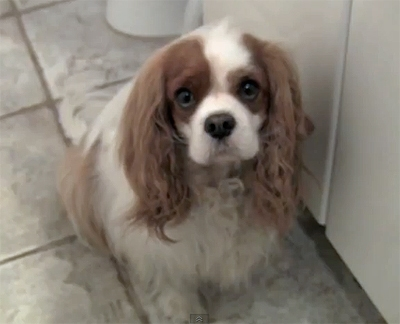 The Saturday Pet Blogger Hop: Smart dog locks himself in the bathroom for sympathy