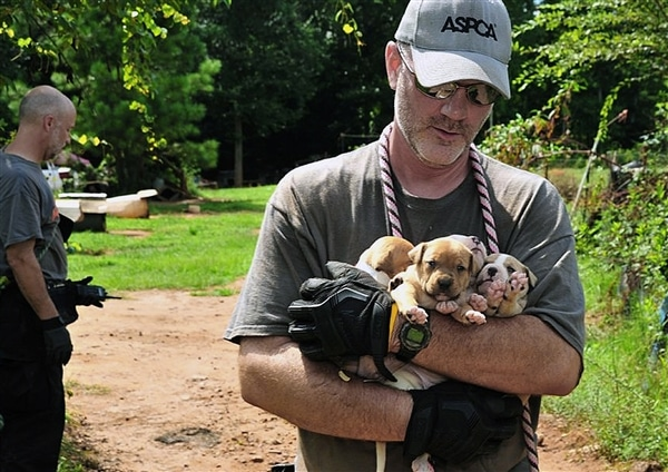 Second Largest Dog Fighting Raid in U.S. History Rescues 367 Dogs