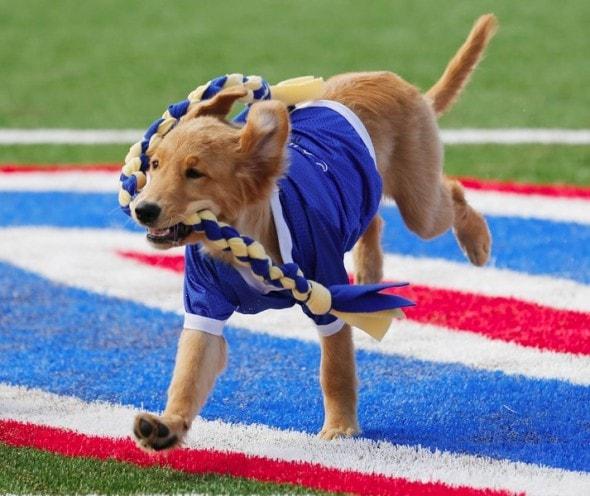 Tulsa Big Dog Rescue