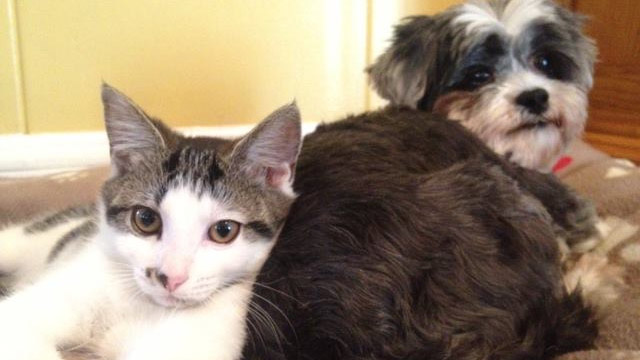 Dog and the Kitten it Rescued find Home Together