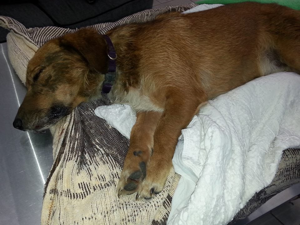 Rescuers Offer Reward after Dog is Thrown from Car into a Culvert