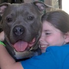 Rescued Pit Bull Becomes Therapy Dog and Bonds with Sandy Hook Survivor