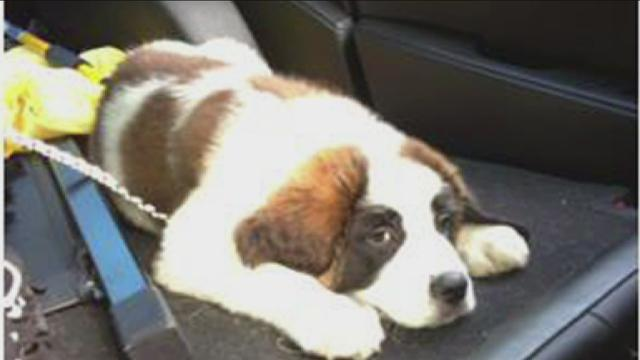 Social Media Brings Stolen Puppy Safely Home