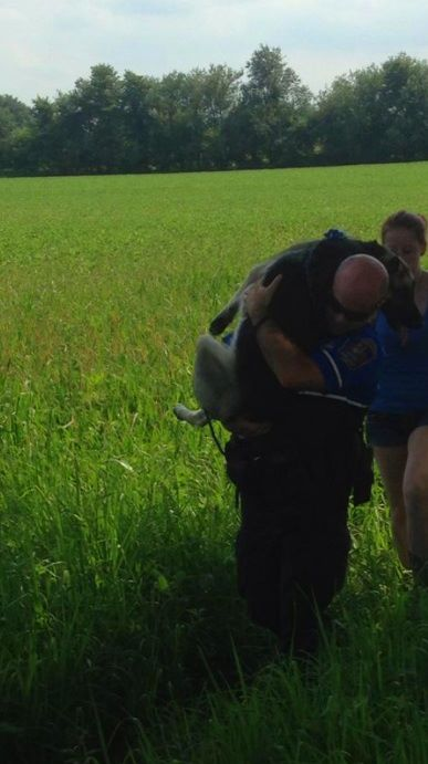 Police Officer Carries Injured German Shepherd to Safety after Car Accident