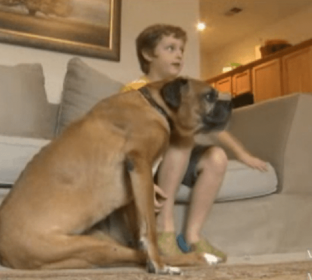 Boy Raises Money for his Dog's Wheelchair