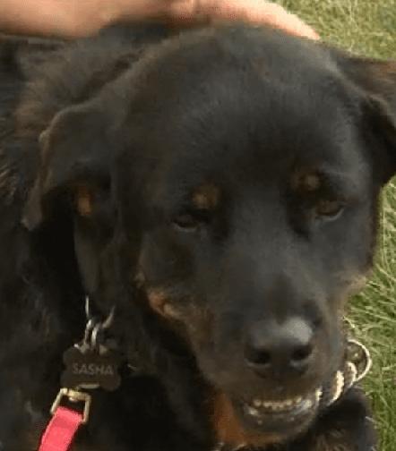 Twenty-Six Volunteers Help Bring Lost Dog Home