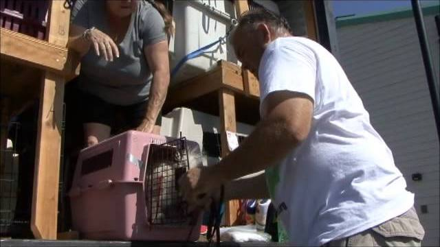Rescue Transport Saves 118 Dogs