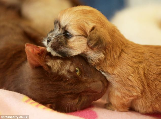 Rejected Puppy Finds New Mom in Siamese Cat