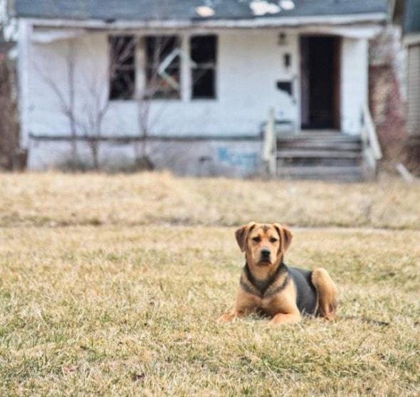 Photo Credit: Detroit Dog Rescue
