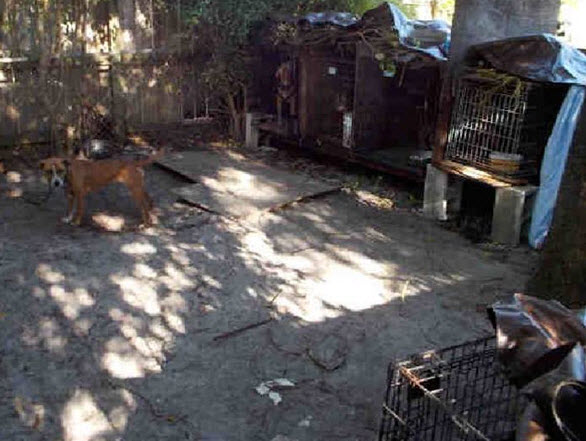 Florida Police Rescue 11 Dog-Fighting-Ring Bait Dogs