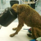 Animal Rescuers Save Dog with Head Jammed inside Plastic Container