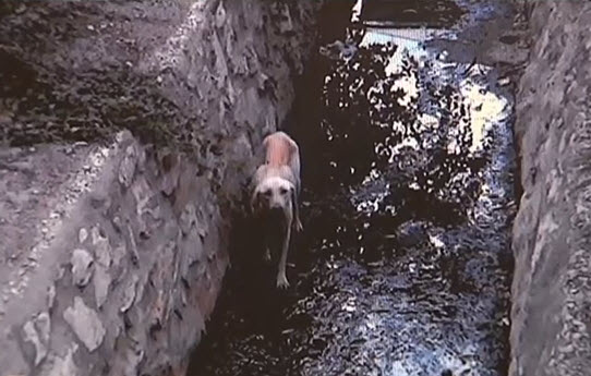 Dog Trapped in Tunnel for 45 Days Gets Rescued