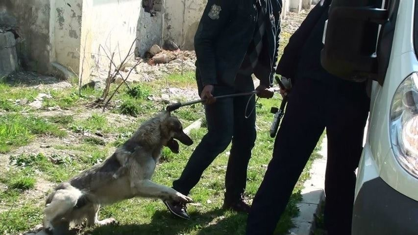 Romania Officials Approve Mass Killings of Stray Dogs