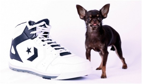 Milly - named World's Smallest Dog in Sept. 2013