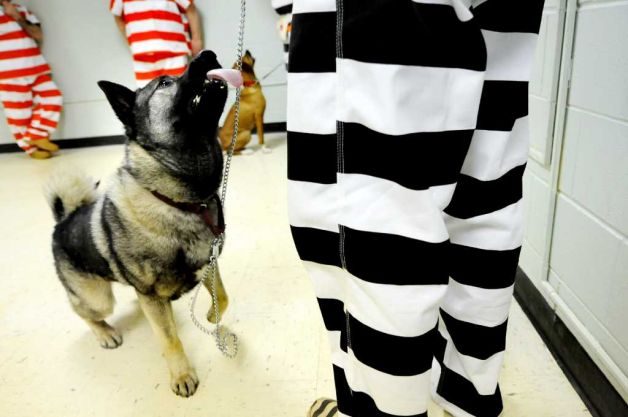 Jail Inmates Could Save Stray Dogs