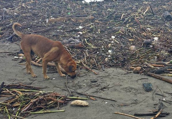 Animal Lovers Set out to Help Dogs Abandoned during Mexico's Recent Floods