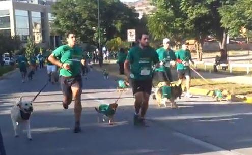 Celebrating Pet Day with Doggy Marathon
