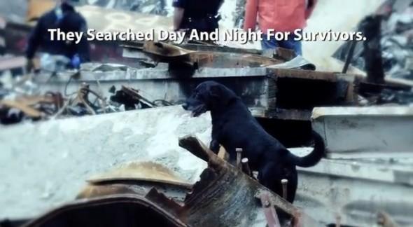 9.11.13 - Hero Dogs of 9.11 3